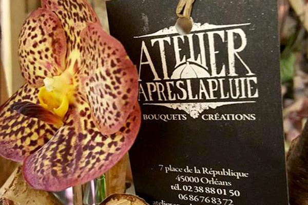 carte de visite, orléans, fleuriste, atelier après la pluie, dmsml